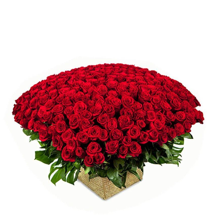 Roses - In Awe