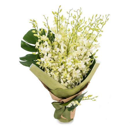 Singapore Orchids - Elegance