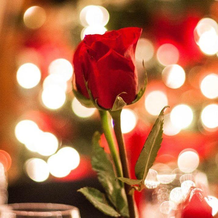 5 of the Best Valentine's Day Flower Ideas