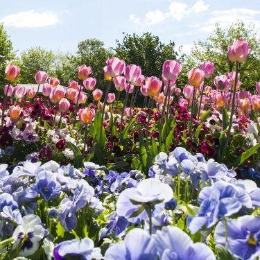 Floriade Canberra Flower Show