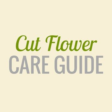 Cut Flower Care Guide