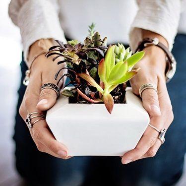 Housewarming Plant Gift