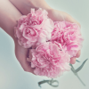 Pink Carnations in a girls hand
