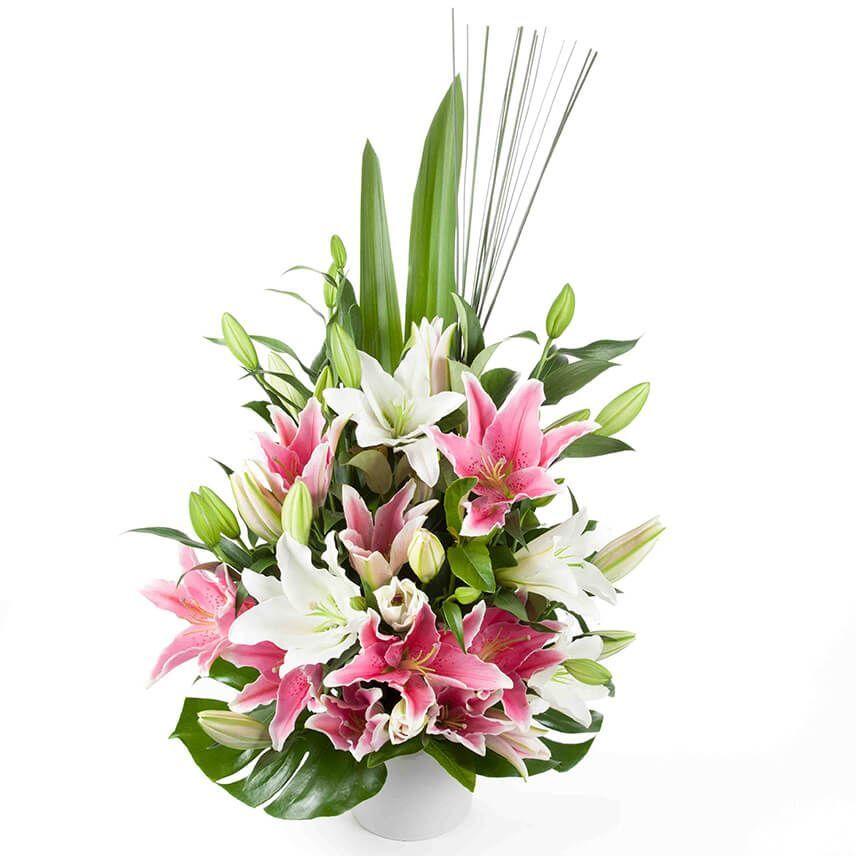 Oriental lilies brilliance
